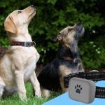 dog gps tracking collar via cell phone app